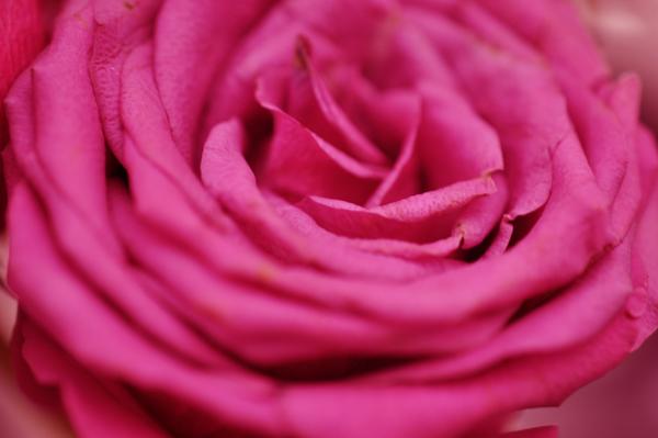 Spring flowers 042b